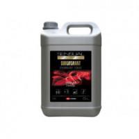 Nettoyant surodorant concentré SENSUAL FRAISE - 5L